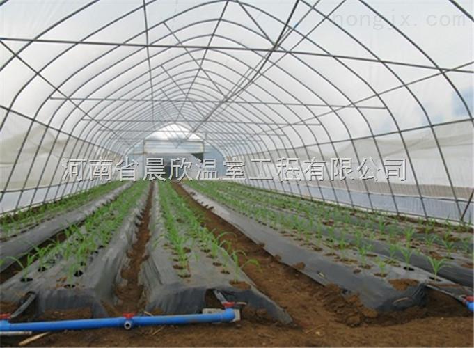 新一代連棟薄膜溫室蔬菜大棚建設
