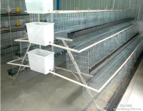 鸡鸽兔笼鸡笼鸽子笼兔子笼狐狸笼水貂笼饮水器养猪网养鸡网铁丝网