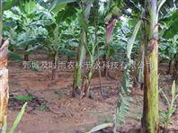 湖南懷化果樹滴灌設備