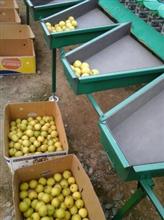 柠檬洗果机