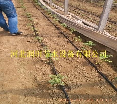 塑料滴灌带|宝丰县供应商
