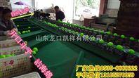 多功能全自动台湾青枣分选机,分选青枣大小机器