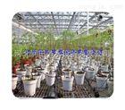 滴箭邯郸市花卉滴灌厂家专供 河北盆栽花卉种植滴箭减价