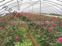 花卉栽培灌溉用滴箭 河南滴灌滴箭优惠促销中