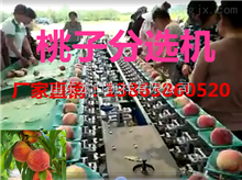 XGJ-T全自动分选桃子大小的设备