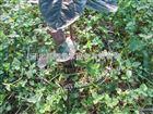 河北石家庄湖南批发小管出流果树水管 溆浦县零售果树滴灌毛管