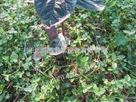 湖南滴灌PE管优质管材 会同县果树滴灌设备经久耐用