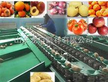 XGJ-SZZ辽宁--电子式苹果选果机--分拣鸡冠苹果大小的选果机