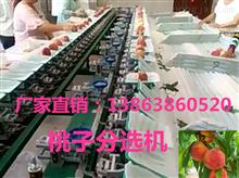 XGJ-T供应水蜜桃选果机* 水蜜桃分选 水蜜桃选果机