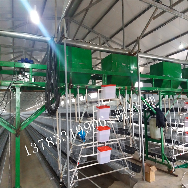 厂家专业生产自动化蛋鸡喂料机系统上料机 自动化养殖设备