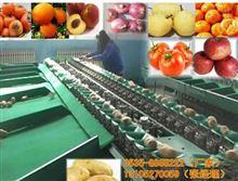 XGJ-YC供应洋葱选果机厂家 全自动洋葱选果机