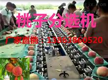 XGJ-T水蜜桃选果机 桃子分选机 重量分选