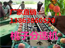 XGJ-T江苏桃子选果机厂家