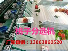 XGJ-T江苏桃子分级机,桃子分选设备