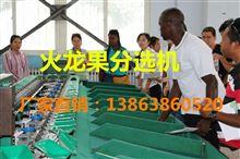 XGJ-SZZ供应火龙果自动选果机 莆田广泛使用火龙果选果机