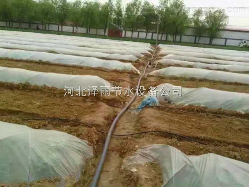 井冈山市专业从事农业大棚滴灌管生产江西省果树滴灌管材报价