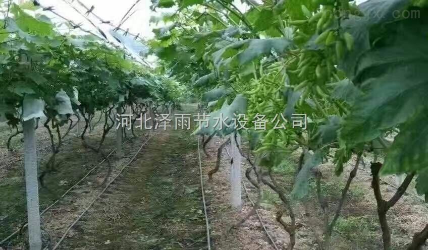 娄底市温室软管滴灌系统湖南省大棚吊喷滴灌管设备厂家