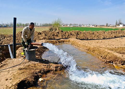 3月中旬:内蒙古河套灌区小麦种植如期开耧