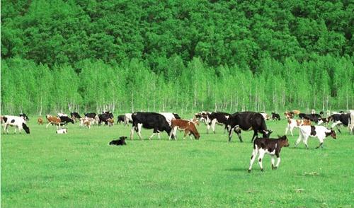 2017畜牧业补贴应该怎么领