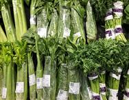 塑料大棚叶菜生产全程机械化技术指导意见