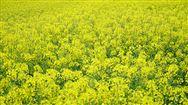 湖北農機部門雙向發力戰疫情促春耕