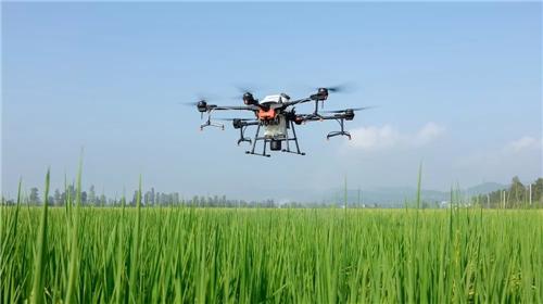 农业农村部派出工作组督导重大病虫害防控