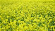 广州世界农业博览会全力扶持湖北农企