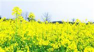 寧波市農機購置補貼實施進度(截至2020年3月30日)