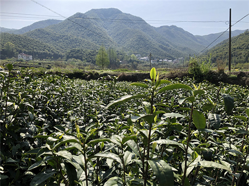 山西省多举措大力推进非粮类农产品生产机械化