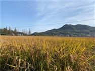 安徽省农业农村厅关于做好支持新型农业经营主体建设高标准农田工作的通知