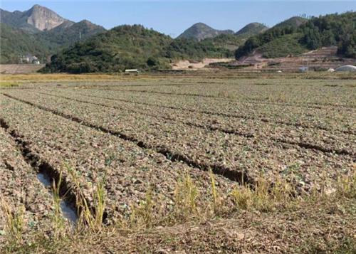 每亩补助20元,黑龙江省出台黑土地保护性耕作实施方案