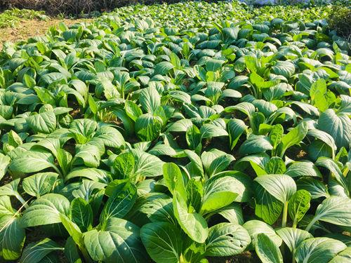 宁波市对疫情期间蔬菜生产机械购机者进行了临时补贴