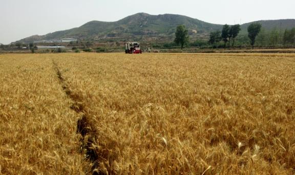关于印发《2020年度黑龙江省农机事故损害赔偿项目执行标准》的通知
