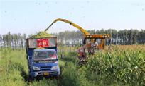 4QZ-830型自走式青贮饲料收获机