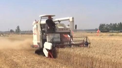 沃得超级锐龙小麦收割现场演示