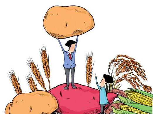 土豆叶卡通