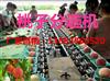 凯祥映霜红晚桃分选机-水果分级机-高品质分选机